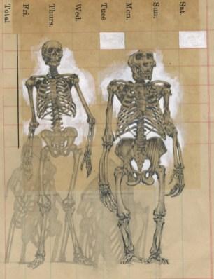 Jason D'Aquino - Skeletons