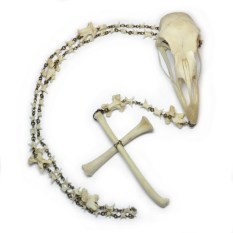 Rooster skull & bones, peacock vertebrae, snake vertebrae, brass beads 26 in., Skull and cross: 11.5 x 3 in. $325.00 Sold