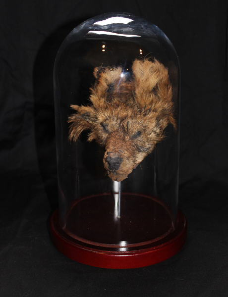 shrunken coyote head, coyote skin, mixed media, 7 x 7 x 9 in. $575.00