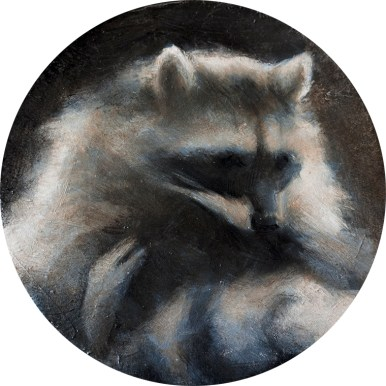 Shaun Berke - The Raccoon