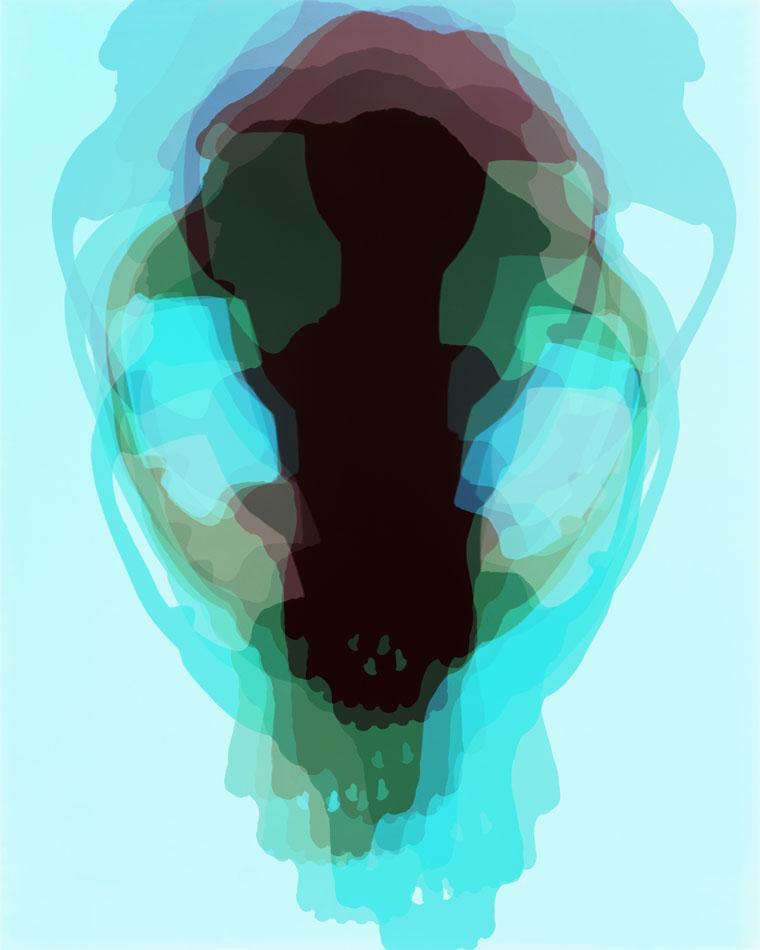 Doug Fogelson - Fox, Skull