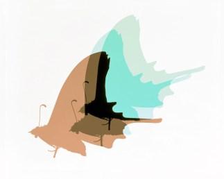 Doug Fogelson - Moth