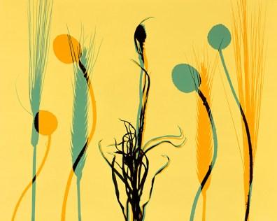 Doug Fogelson - Flower, Seed