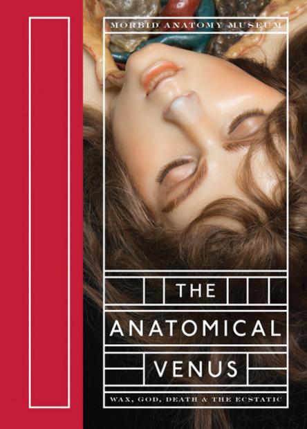 anatomical-venus