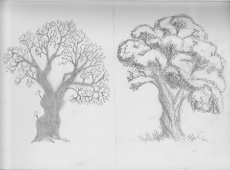Studie van bomen