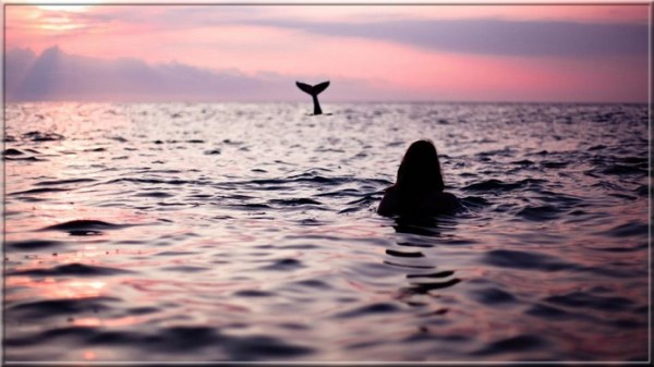 Attends-moi, cher dauphin, j'arrive !