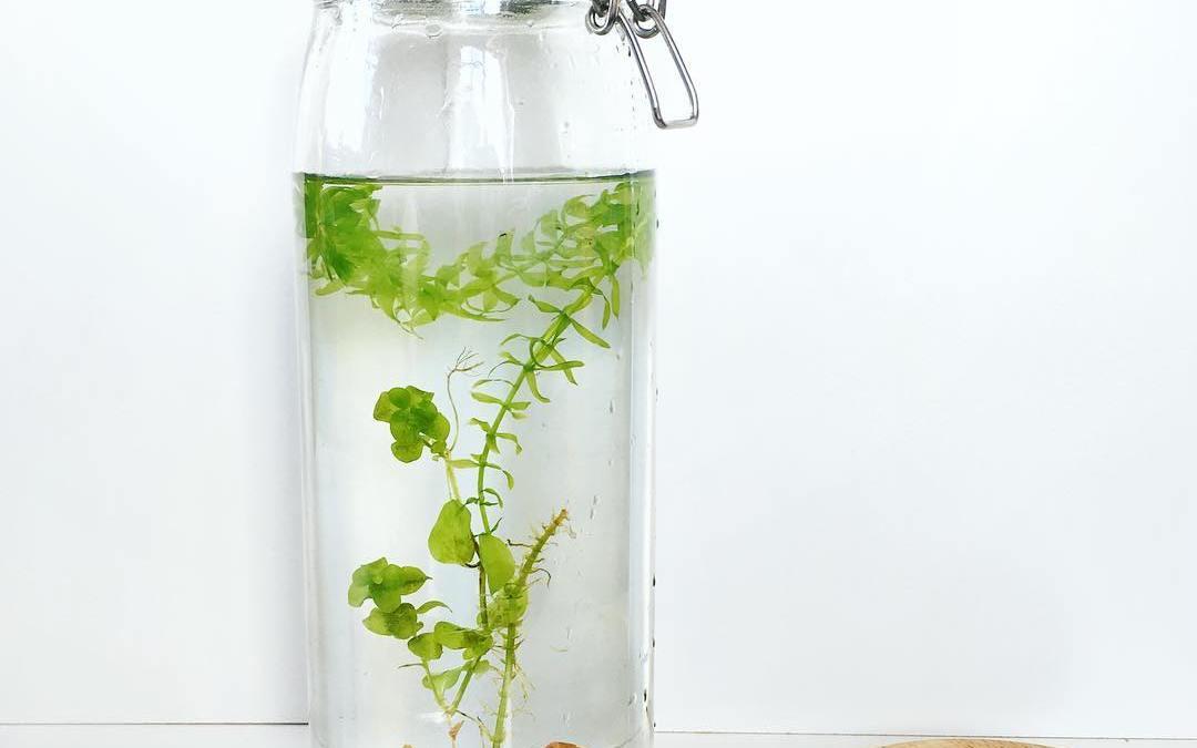 DIY express : plante aquatique