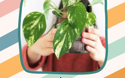Bien s'occuper de ses plantes