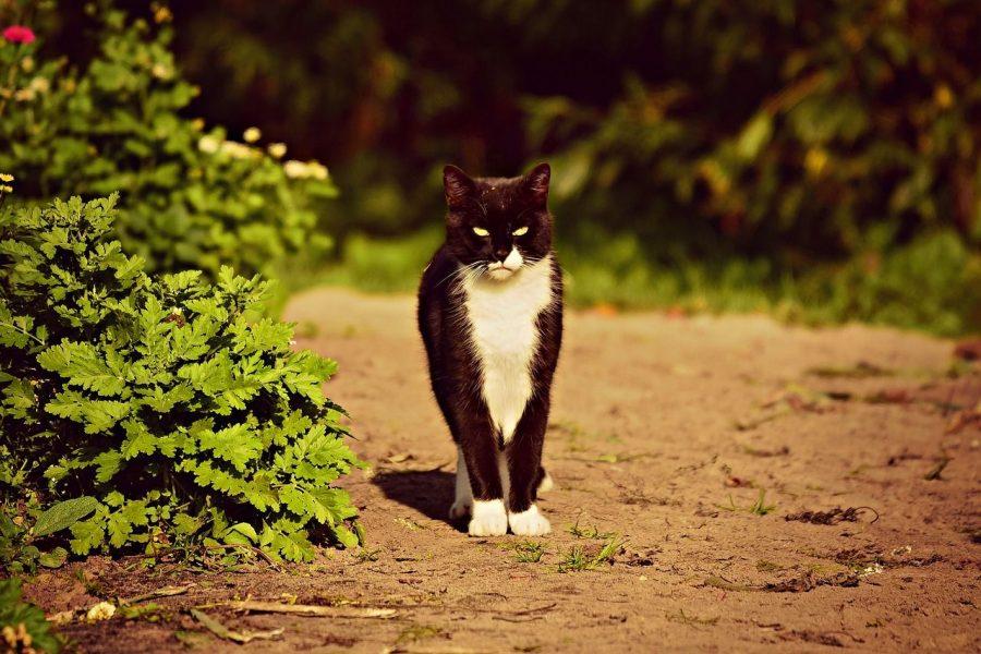 naturels anti chats