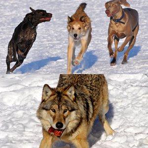 Imagen de http://www.eluniversal.com.mx