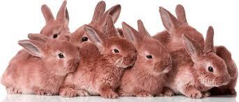A partir de Noviembre todos los agricultores manchegos tendrán que poner microchip a los conejos que tengan en sus tierras.