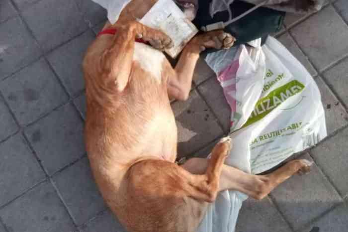 A las animalistas manchegas que se les muera el perrete o el gatete, tendrán derecho a la pensión de viudedad