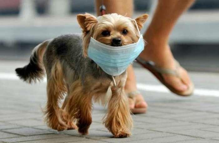 El perro de una animalista de Las Pedroñeras simula tener coronavirus para que su dueña no lo saque más
