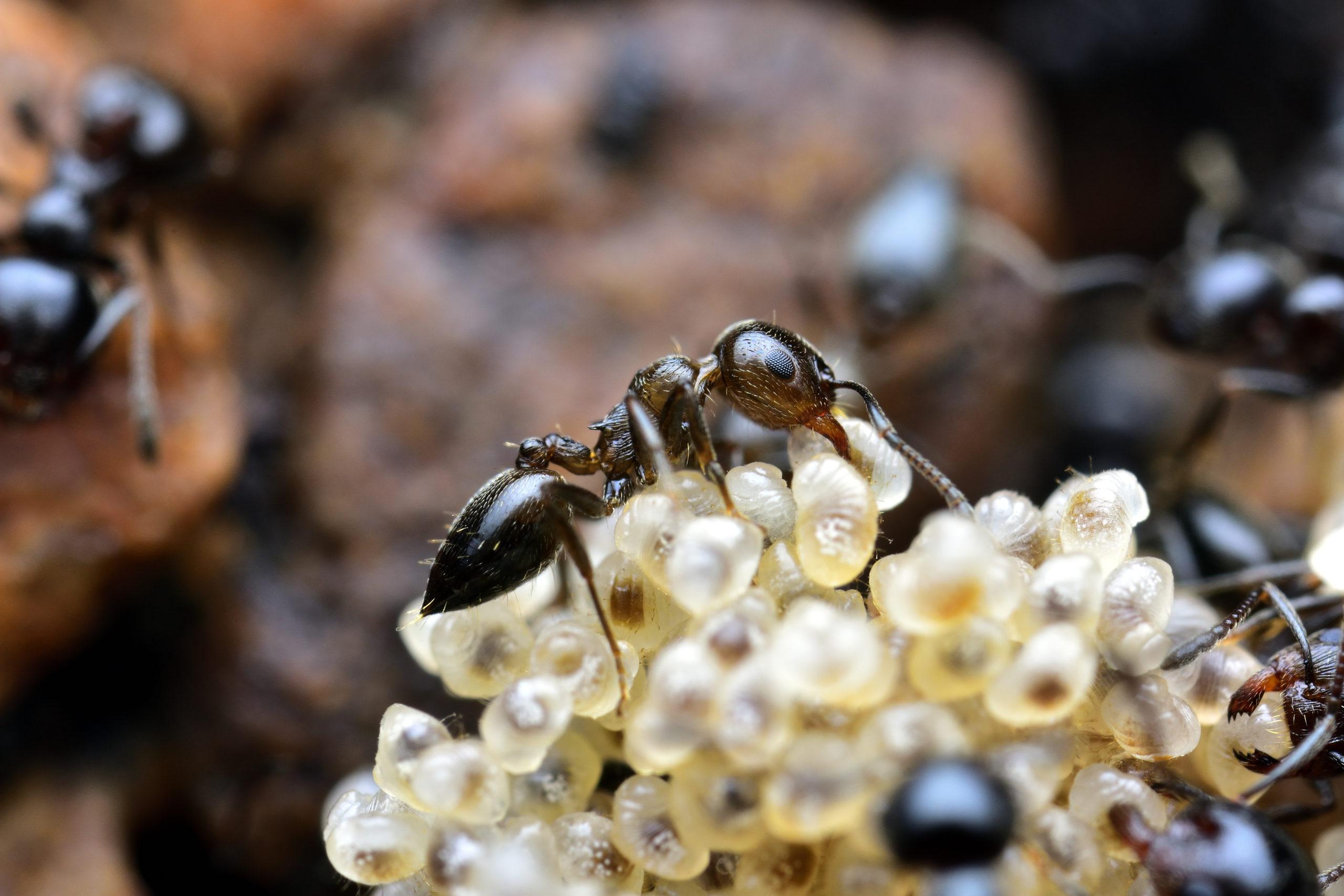 Hormigas © La Manchuela por el Clima CC BY-NC-ND 4.0