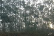 Bosque al amanecer