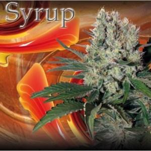 syrup_Buddha_seeds