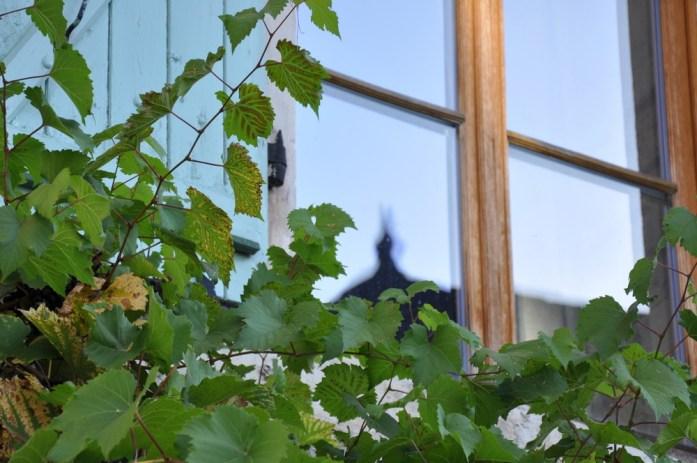 Martel - vigne vierge autour des fenêtres