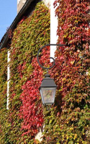 Martel - murs couverts de vigne vierge