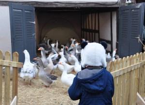 Le marché de Noël médiéval de Ribeauvillé - gardien d'oies