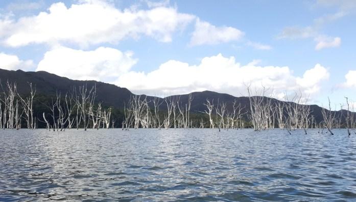 Nouvelle Calédonie - forêt noyée de la rivière bleue