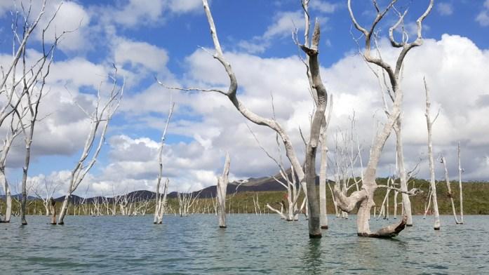 Nouvelle Calédonie - forêt noyée