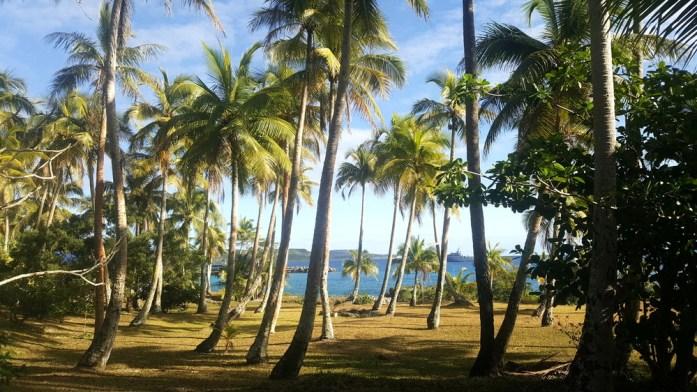 Îles de Nouvelle Calédonie - cocotiers à Maré