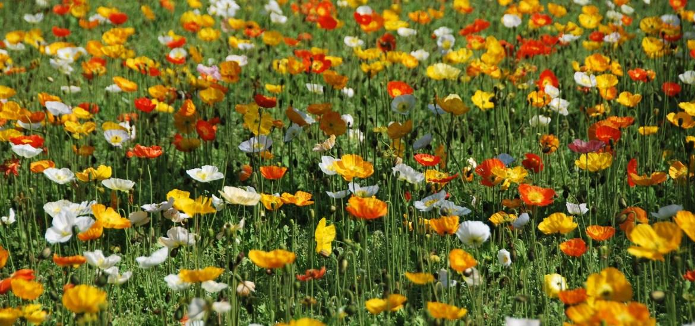 Paris au vert - Champ de fleurs au jardin des plantes