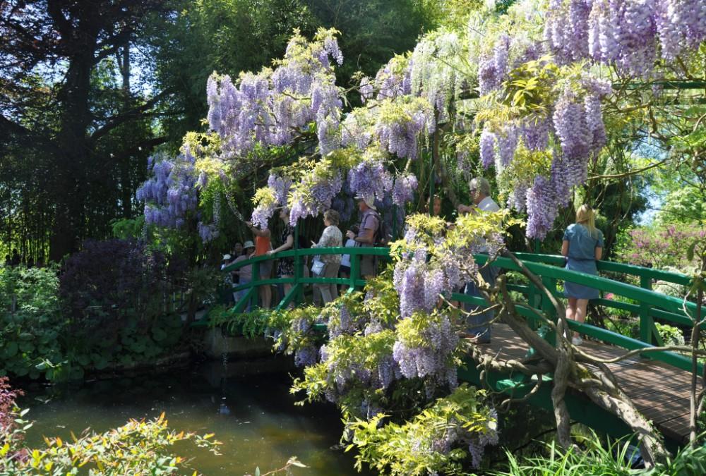 Jardin de Monet à Giverny - pont recouvert de glycines
