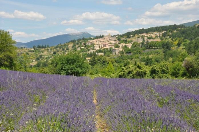 Photographier la lavande en Provence - Aurel