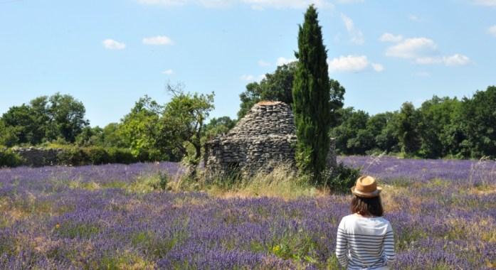 Photographier la lavande en Provence - borie sur le plateau des Claparèdes