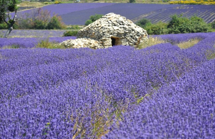 Photographier la lavande en Provence - Ferrassières