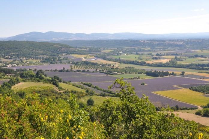 Photographier la lavande en Provence - vue d'en haut
