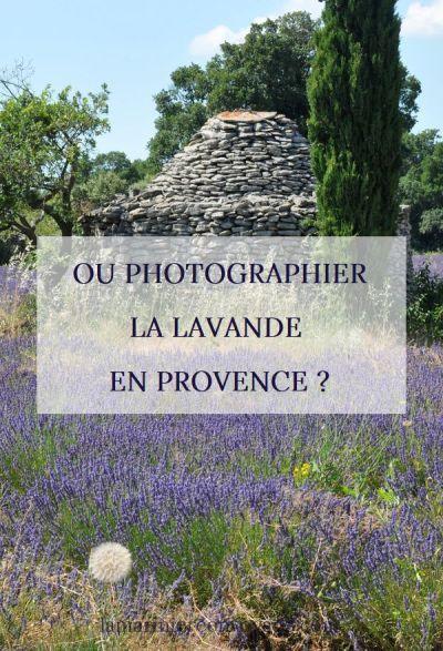 Où photographier la lavande en Provence ?