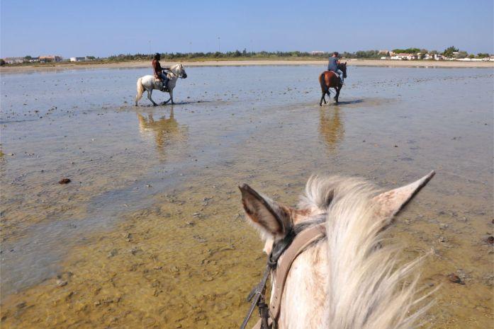 Camargue : balade à cheval aux Saintes-Maries