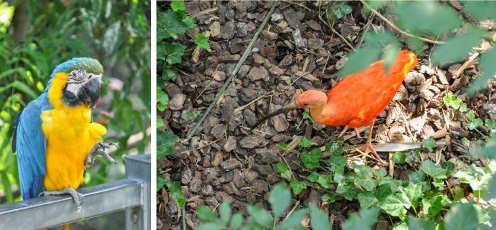 Parc de Oiseaux de Villars-les-Dombes - Blog La Marinière en Voyage