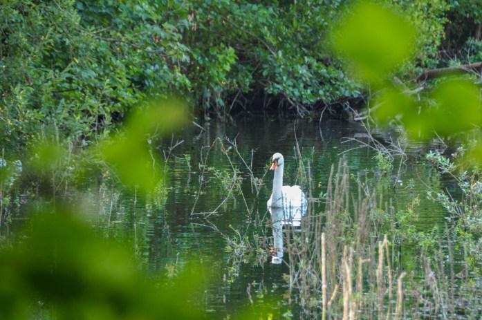 Forêt de Chantilly - Blog La Marinière en Voyage