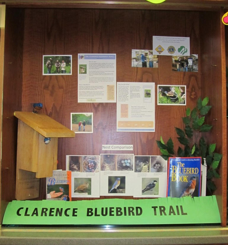 Display at Clarence Town Library