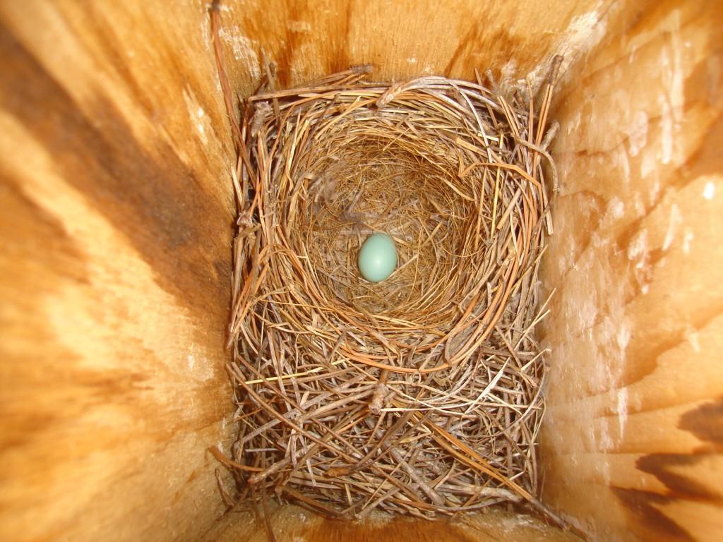 Do Birds Prefer to Lay Their First Egg on Saturdays?