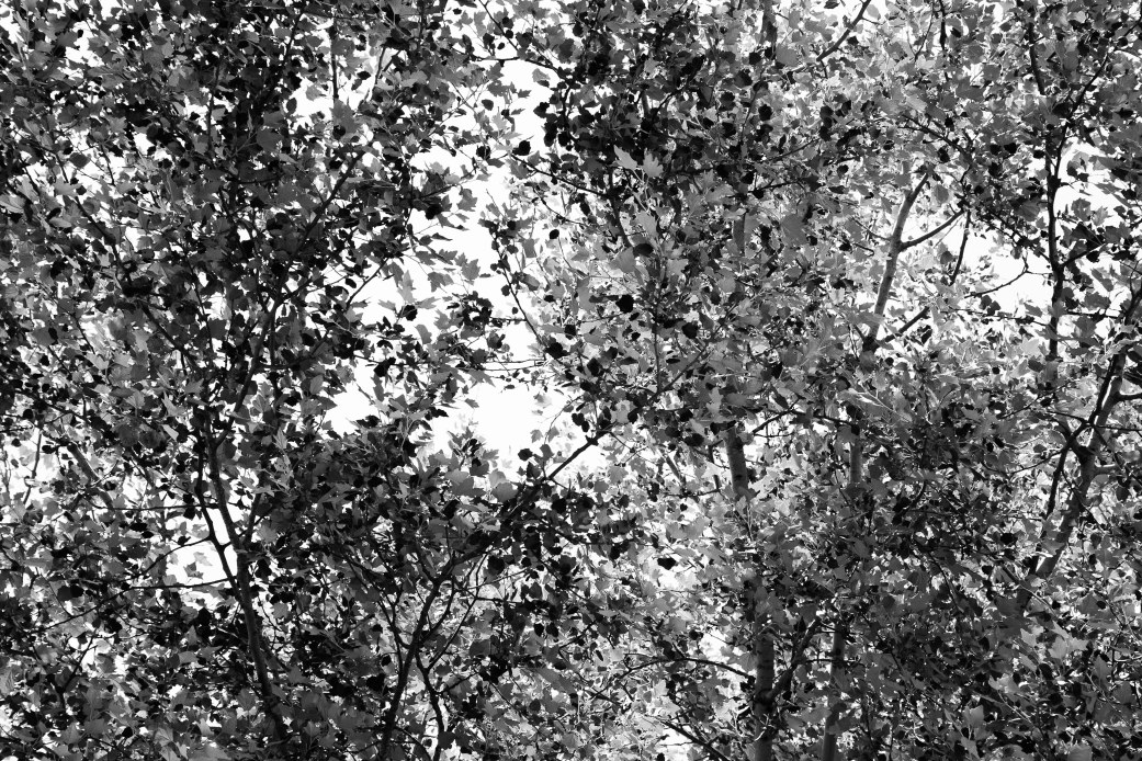 Looking up during our picnic