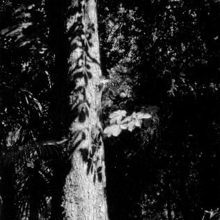 """""""Encaje de sombras sobre árbol"""" Bosque de la Alhambra, Granada, 2008"""
