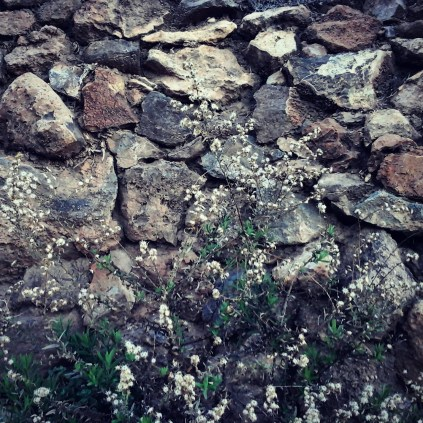 Muros de los bancales