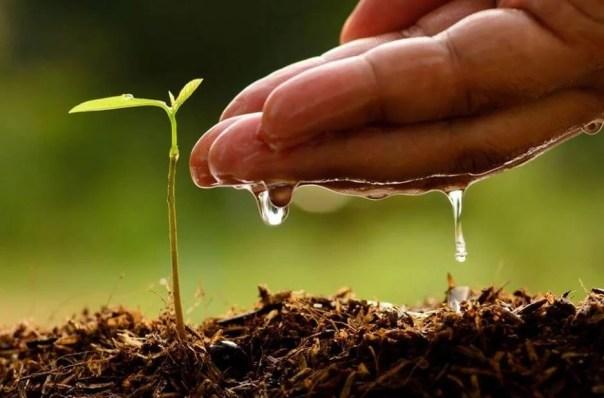Mano regando una planta