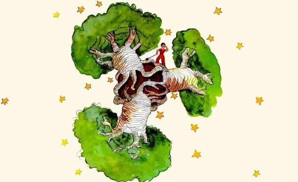 baobabs y el principito