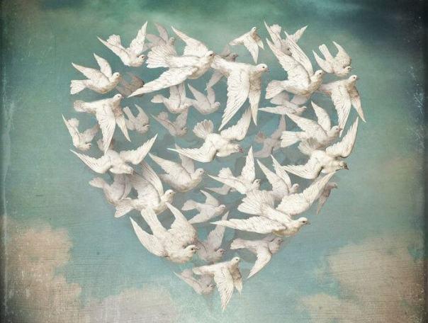Palomas formando un corazón