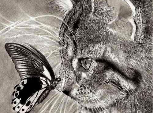 Amor a un animal: gato con mariposa