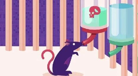 Rata bebiendo en un experto