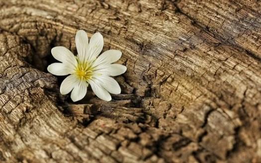 fleur dans un arbre symbolisant avoir surmonté la période de deuil