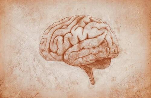 La corteza premotora: características y funciones