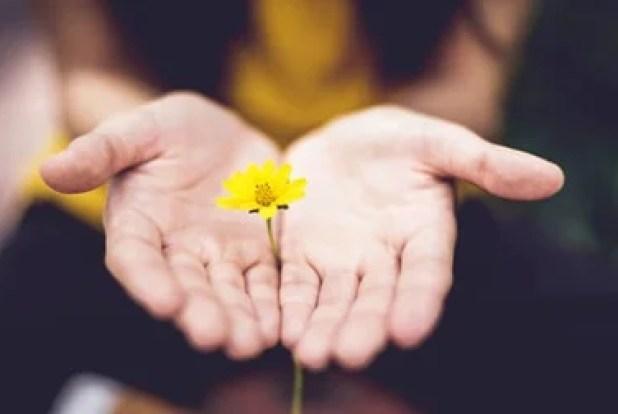Volveremos a florecer (superación personal)