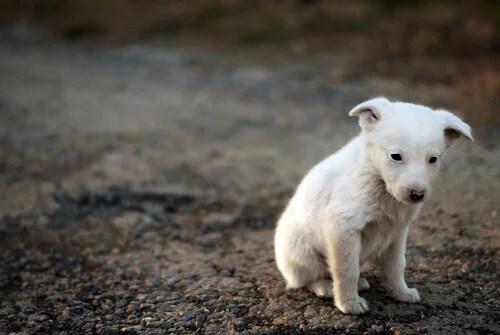 La consciencia de sufrimiento en animales